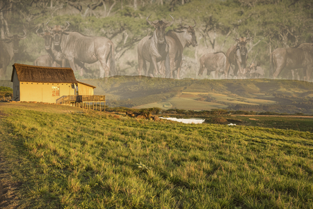 Photo composition of the Drakensberg mountains, South Africa. The foreground shows a meadow with water hole and a sunlit lodge. Instead of the background sky there is an overlay with a gnu herd of the same area.