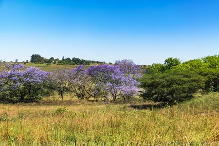 Beautyful landscape of Swaziland Mantenga nature reserve park Stock Photo