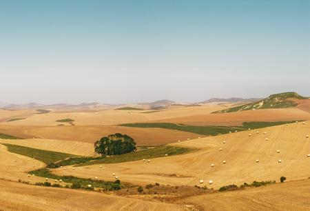 Huge wheat fields in south africa near Stellenbosch.