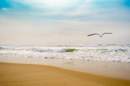 Single seagull flying over golden beach breakwater Stock Photo