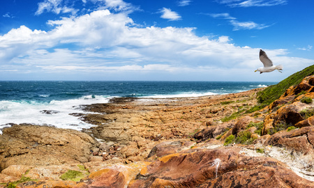 Tremendous Robbberg nature reserve coastline at Plettenberg bay South Africa. A seagull flies through the scene. Stock Photo