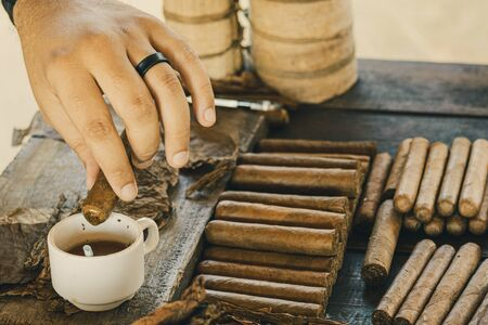 Tobacco manufacturer shows the preparation of cuban cigar and dips it into a honey cup.