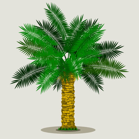 Editable Isolated Date Palm Tree on Light Background with Grass at the Bottom Vector Illustration