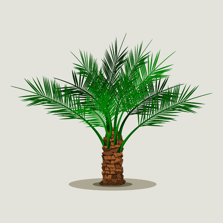 Editable Isolated Short Date Palm Tree on Light Background Vector Illustration