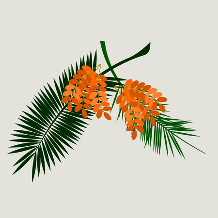 Editable Isolated Date Palm Fruit with Stalks and Leaves on Light Background in Flat Style Иллюстрация