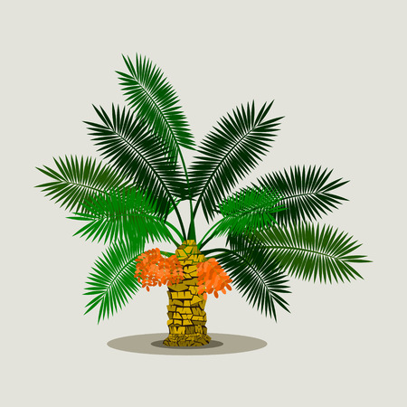 Editable Isolated Short Date Palm Tree on Light Background with Ripe Fruits Vector Illustration Иллюстрация