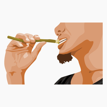 Editable Bearded Man Brushing Teeth using Miswak Isolated on White Background Vector Illustration