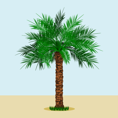 Editable Long Trunk Date Palm Tree