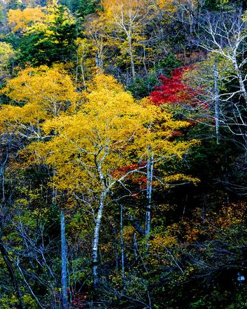 storied: Autumn dye