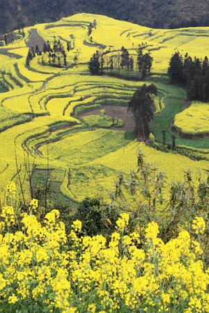Screw field Reklamní fotografie - 97292334