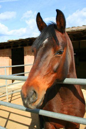 Headshot of a horse at the farm. photo