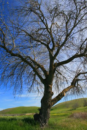 ecodiesel: Leaveless tree in a forest over blue sky.