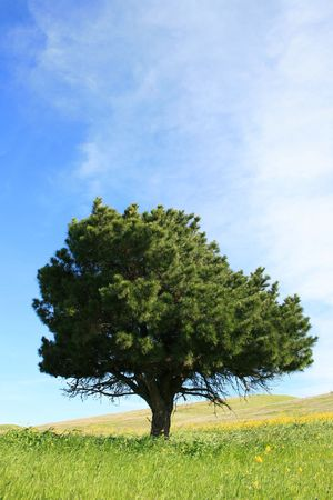 ecodiesel: Close up of a tree in a forest over blue sky.