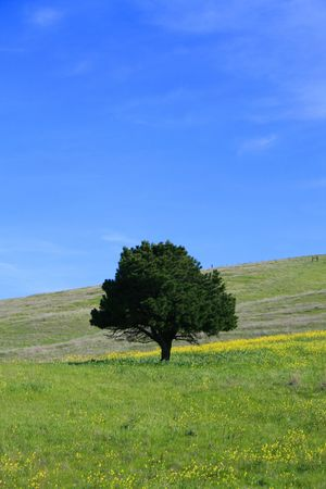 ecodiesel: A tree in a forest over blue sky.