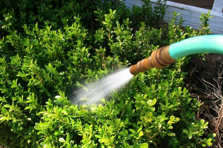 шланг: Water hose spraying water in a garden.