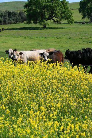Grupo de vacas en una hierba verde en una granja.  Foto de archivo - 2871977