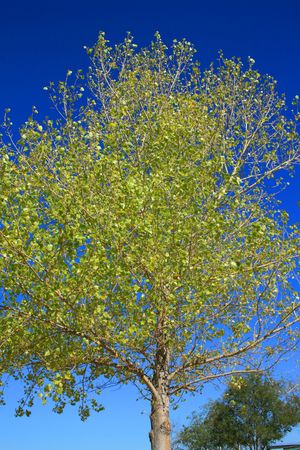 ecodiesel: Single Tree Stock Photo