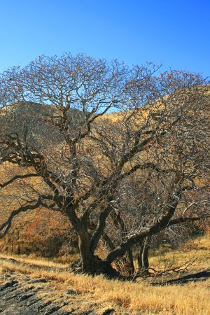 ecodiesel: Oak Trees