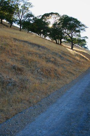 ecodiesel: Sun Shining Through Trees
