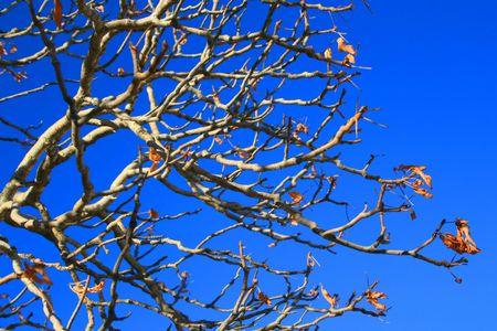 ecodiesel: Oak Tree Branches Stock Photo