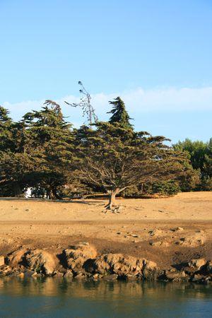 ecodiesel: Trees