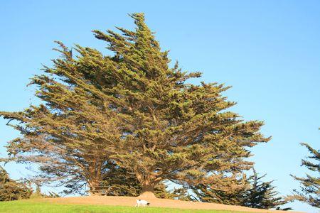 ecodiesel: Dog Under the Tree Stock Photo