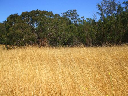 Grass Field Stok Fotoğraf