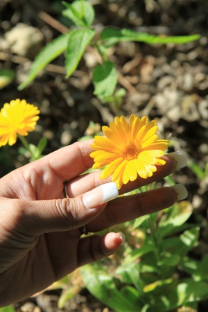 Person Holding a Daisy Flower photo