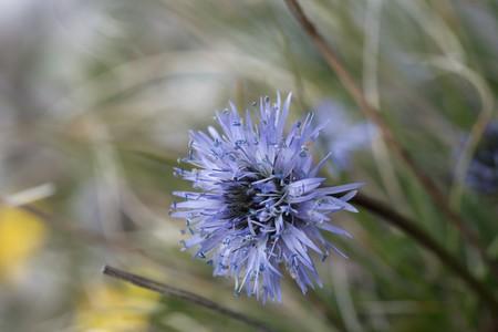 spheric: Spheric flower
