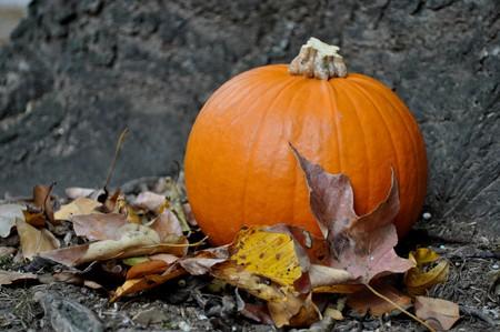 Little pumpkin on a brisk autumn day