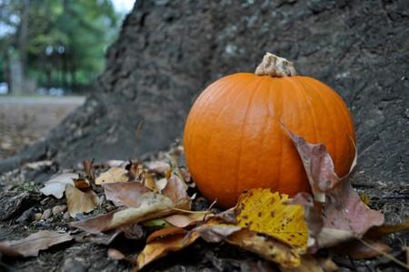 brisk: Little pumpkin on a brisk autumn day