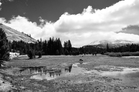 Monochrome tranquil Tuolomne Meadoms in Yosemite National Park