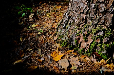 Moss growing on a tree trunk during a brisk fall afternoon