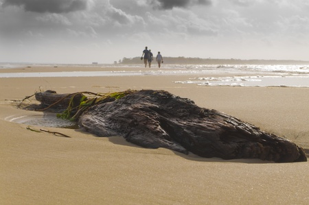 Driftwood on a stormy beach with people in the background