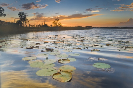 Sunset on a lake with lily pads and orange sky
