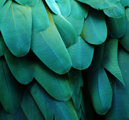 ターコイズ ブルーのオウムの羽