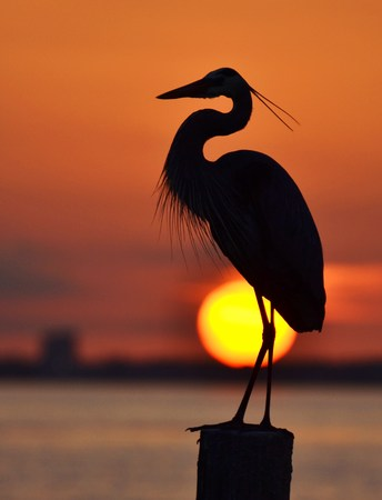 Heron and the Setting Sun Stock Photo