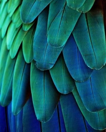 ブルー グリーン コンゴウインコの羽