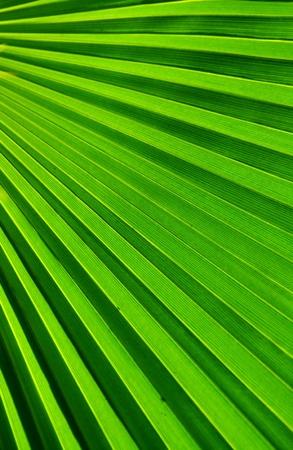 Palmvarenblad Patroon