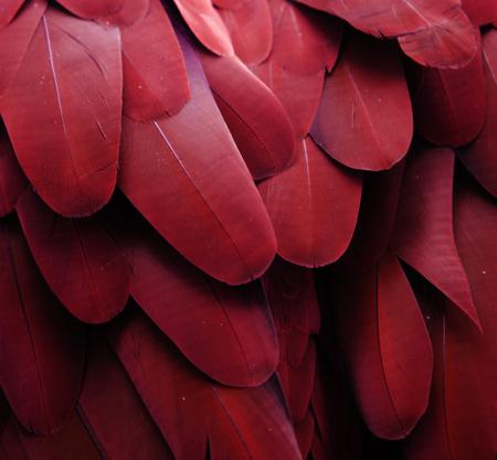 Maroon Feathers