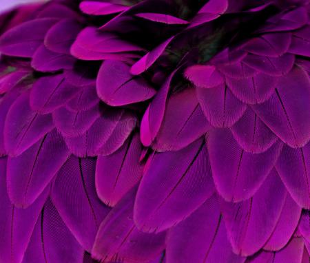 Purple Macaw Feathers