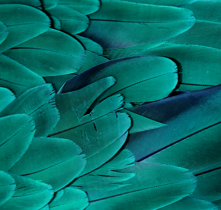 Teal - Turquoise Feathers Stock Photo