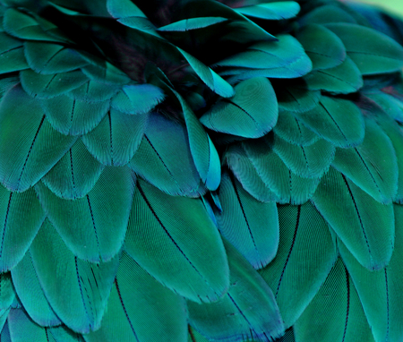 Teal Colored Feathers 版權商用圖片