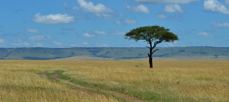 A single tree on the African savannah. Located on the Masai Mara Preserve on Kenya, which is part of the larger Serengeti ecosystem.