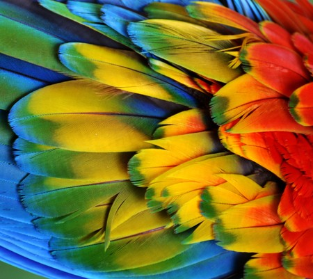 Multi-Colored Macaw Feathers