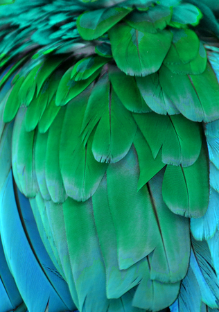 Green and Blue Macaw Feathers Stock Photo