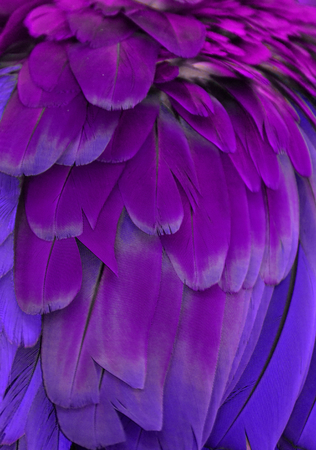 Purple and Violet Feathers Reklamní fotografie