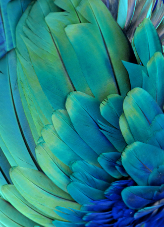 Blue Parrot Feather Pattern