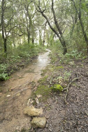 Stream crossing a leafless forest, belonging Ses Fonts Ufanes, natural water attraction in Mallorca.