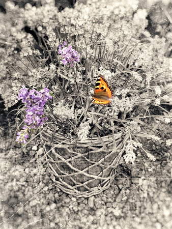 Pot with purple flowers and orange butterfly and the rest textured in soft vintage sepia tones with scratches and stains.